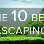The best Aquascaping Fish