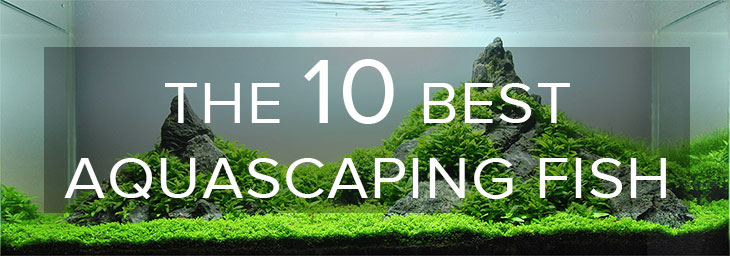 The 10 Best Aquascaping Fish