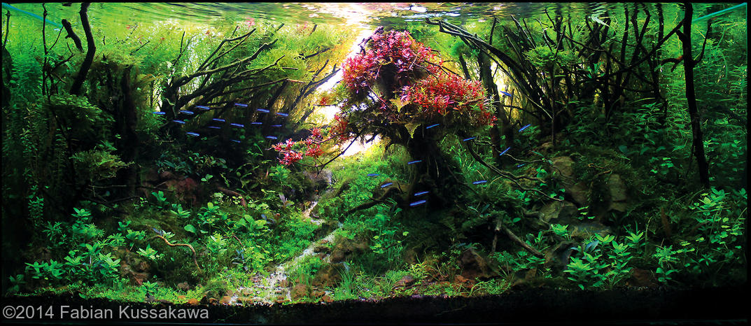 Best Aquascapes Of 2014 Aquarium Info
