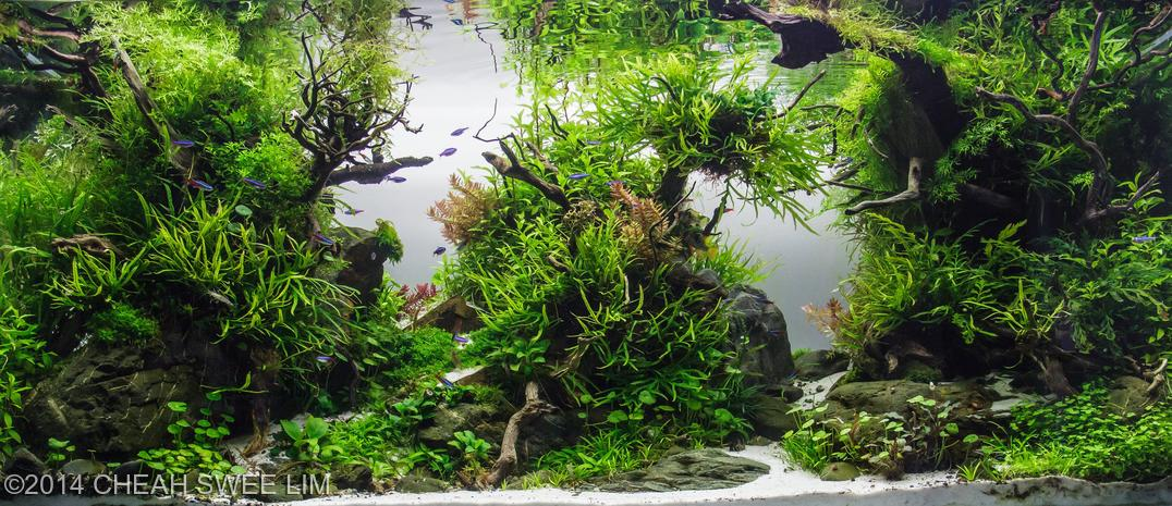 Easiest Freshwater Plants for Beginners - Aquarium Info