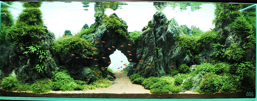 Best Aquascapes of 2014 - Aquarium Info