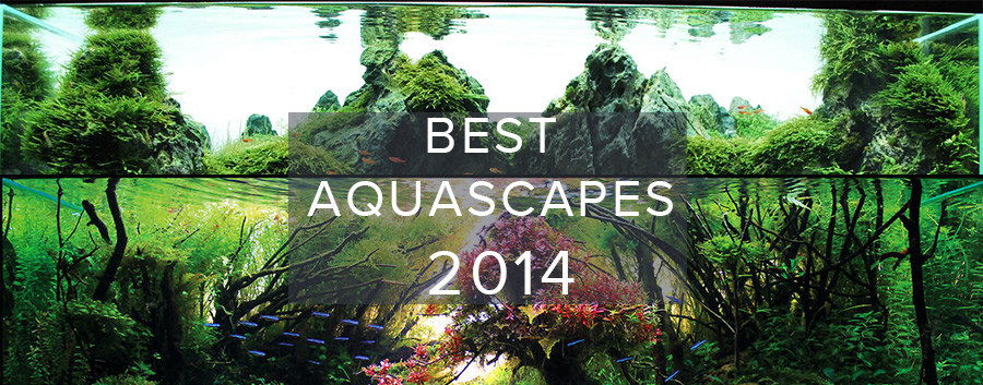 Best Aquascapes of 2014
