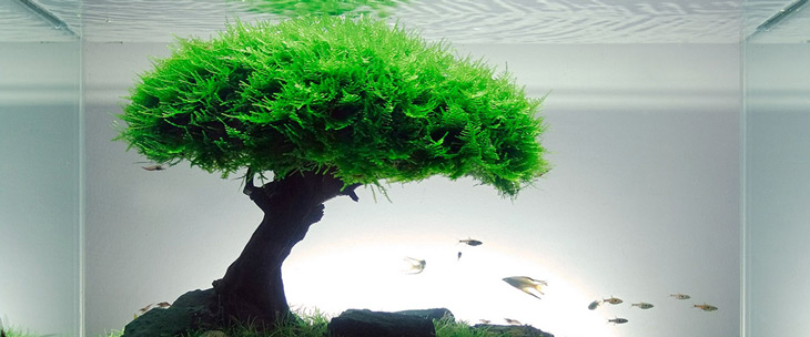 Christmas moss has been carefully arranged over a man-made 'mesh' to give the illusion of a tree