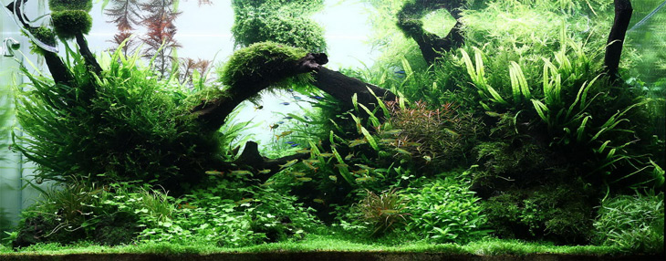top 6 benefits of aquatic plants in the aquarium. Black Bedroom Furniture Sets. Home Design Ideas