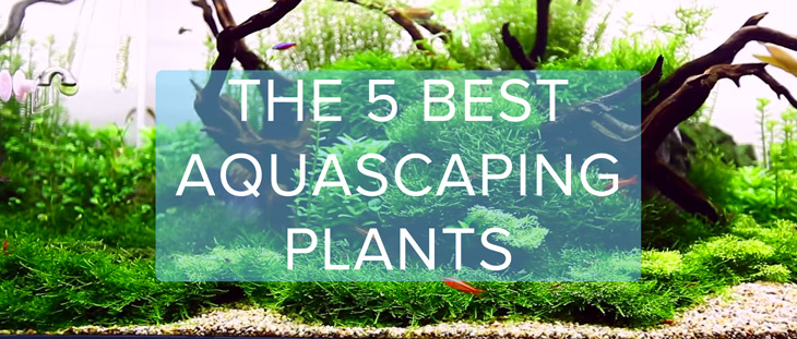 The Top 5 Best Aquascaping Plants
