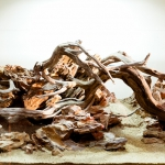 selecting aquarium driftwood