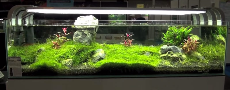 Setting Up Your Aquarium & Maitenance