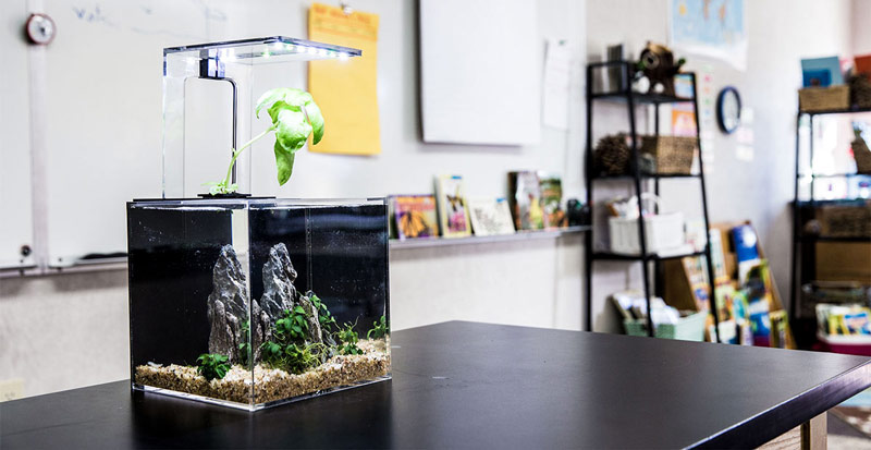 EcoQube C Review: The Desktop Aquarium