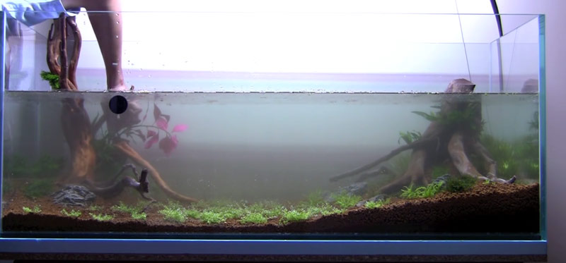 Setting up your aquarium involves slowly filling the tank using a hosepipe