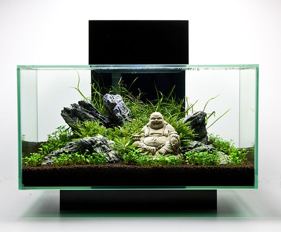 Top 10 best fish tanks august 2017 review picks for Decoration zen aquarium