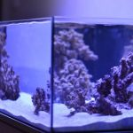 The Best LED Lights for Growing Coral in the Marine Aquarium