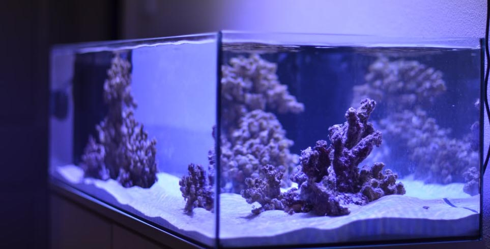 The best LED aquarium saltwater lights