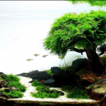 Java Moss - Care, Tips, Moss Carpets & Moss Trees