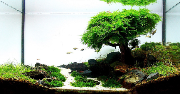 Java Moss – Care, Tips, Moss Carpets & Moss Trees