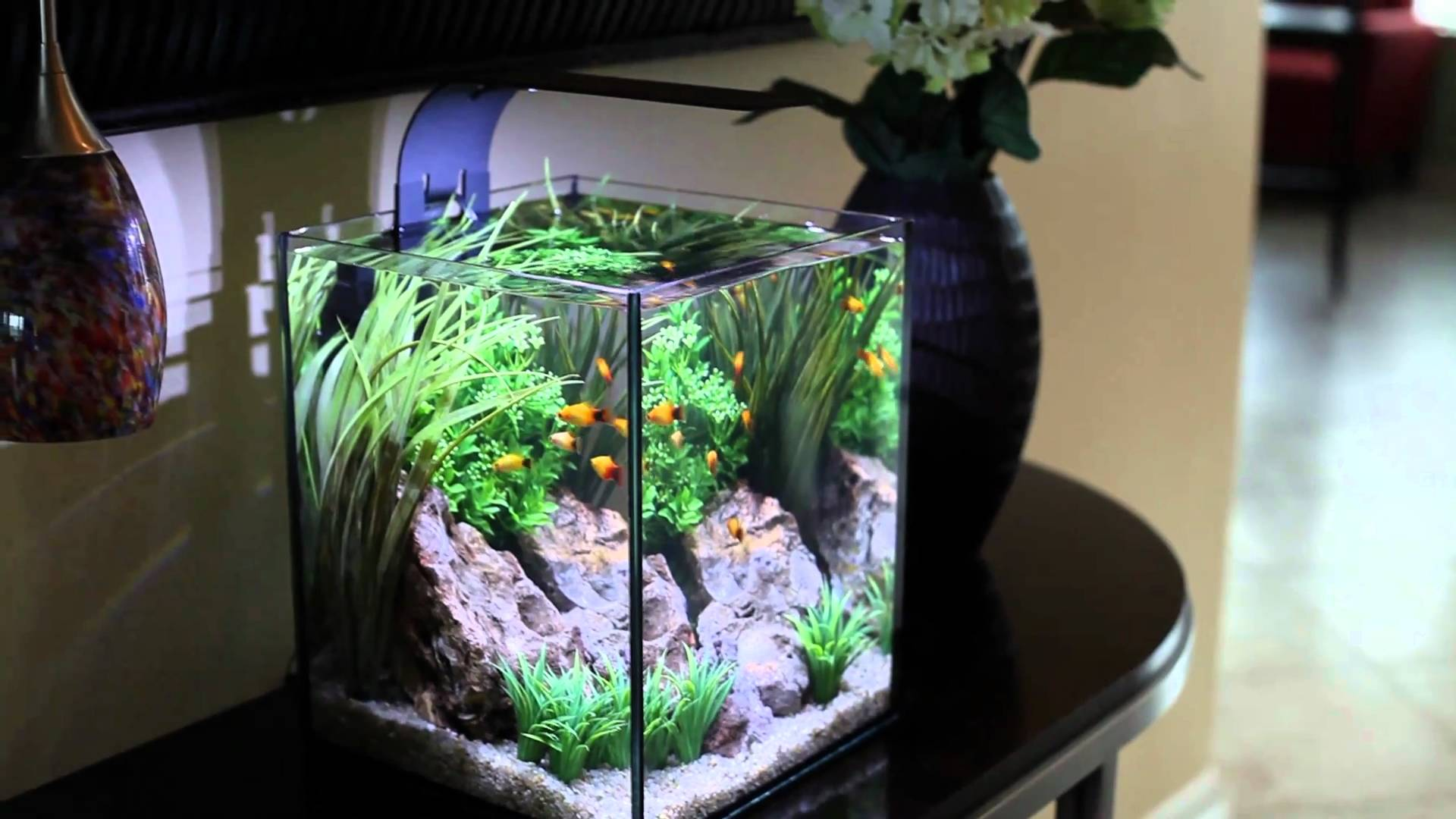 Aquarium info aquarium aquascaping marine aquariums for Tetra fish tank