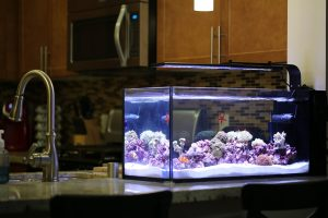 Innovative Marine 20 gallon on kitchen counter