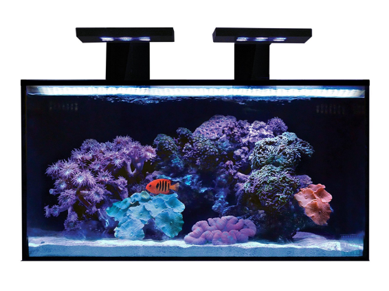 Innovative Marine Nano Reef