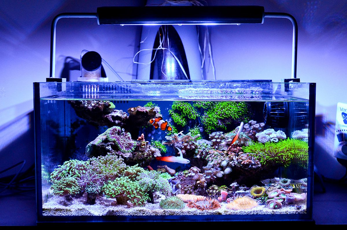 The Best Nano Reef Tanks | 2019 Comparison (Updated)