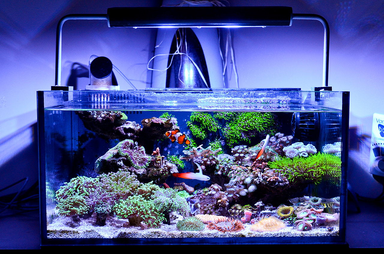 the best nano reef tanks 2018 comparison aquarium info. Black Bedroom Furniture Sets. Home Design Ideas