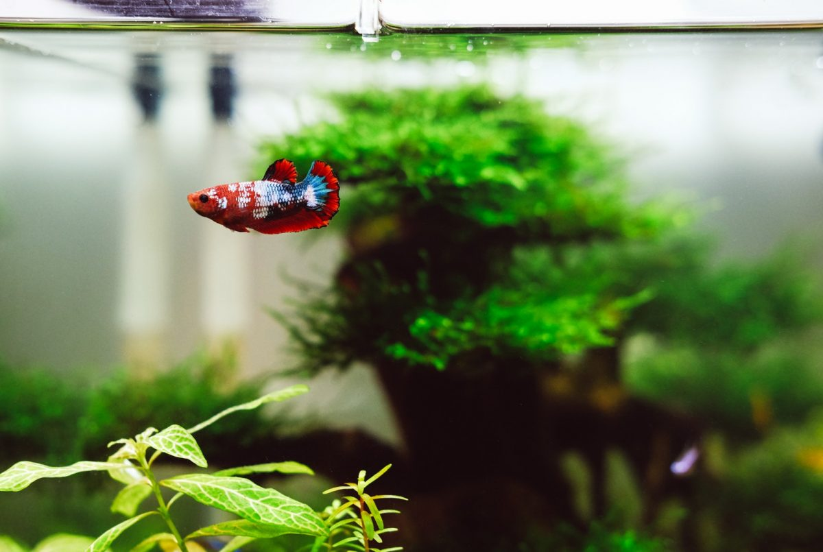 How long to wait until you put a fish in a new tank | Guide